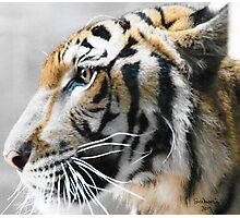 Tiger Profile Photographic Print