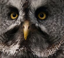 Great Grey Owl by fg-ottico