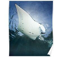 Manta 'n Rays Poster