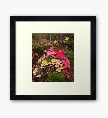 Autumn Floor Framed Print