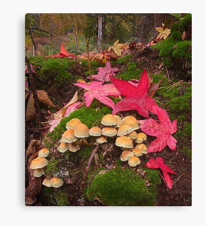 Autumn Floor Canvas Print