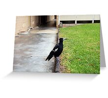 Magpie Four - 22 10 12 Greeting Card