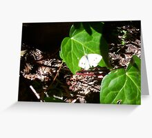 Cabbage Moth Two - 23 10 12 Greeting Card