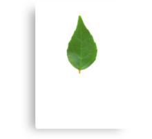 Lil green Canvas Print