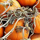 Pumpkins by WildestArt