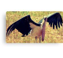 "'Kenian Marabou Stork ""aka"" The Undertaker Bird' Canvas Print"
