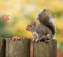 Autumn squirrel by Lyn Evans