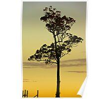 Sunset Vineyard 2 Poster