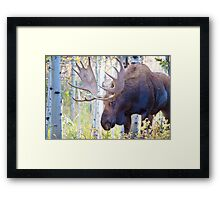 Sad Ending For A Stunning Bull Moose Framed Print