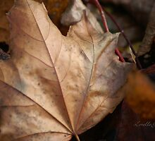 When Leaves Fall by Lorelle Gromus