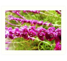 Foothill College Morning Dew Art Print