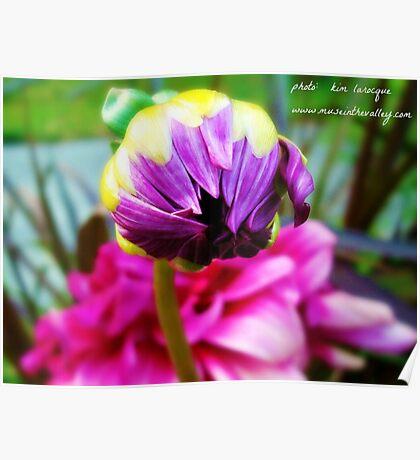 Budding Flower  Poster