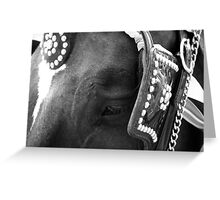 Cody - Carriage Horse Greeting Card
