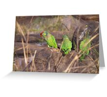 Varied Lorikeet Greeting Card