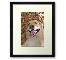 The Happiest Dog in the World Framed Print