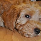 Puppy Dog Eyes by yuliekayy