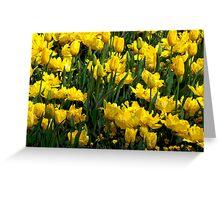 Beautiful yellow tulips Greeting Card
