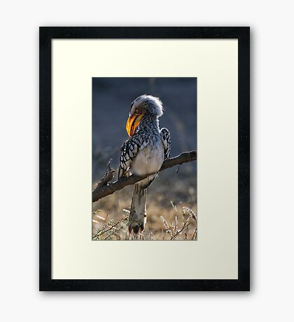 Yellow Grooming Framed Print