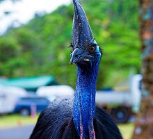 Cassowary in the park by Peter Doré