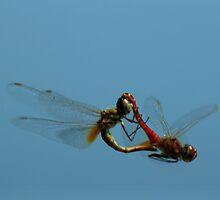 Lovers at Kakadu by myraj