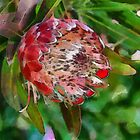 Protea by Fran Woods
