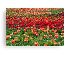 Sea of colourful tulips Canvas Print