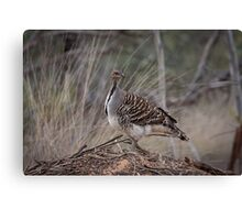 Mallee fowl Canvas Print
