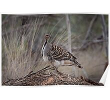 Mallee fowl Poster