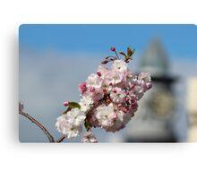 Ulverstone blossoms..... Canvas Print