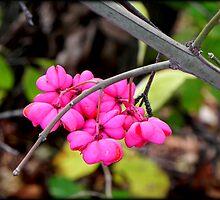 Hot Pink © by Dawn M. Becker
