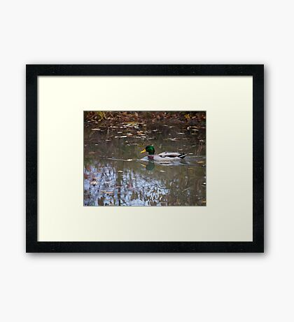 The Casual Drake Framed Print
