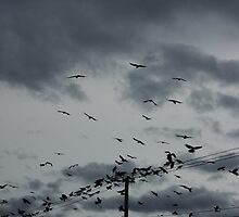 The birds, clouds and telephone lines by hellomrdave