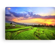 Humming Peace Canvas Print