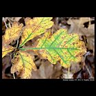 Oak Leaf In Autumn Colors  by © Sophie W. Smith