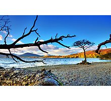 Lone  Loch Lomond Tree Photographic Print