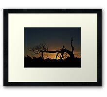 Nevergreen Tree Framed Print