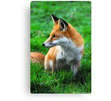 fox 3 Canvas Print