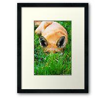 peeping fox Framed Print