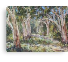 Lake Innes Nature Reserve 2 - plein air Canvas Print