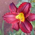 Daylily by Annabella