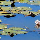 Water Lilies by Robin Lee