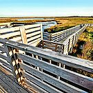 Marshes of Bodie Island by Robin Lee