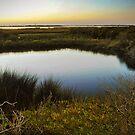 Pea Island by Robin Black