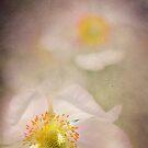 Anemones by marina63
