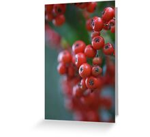 Firethorn Berries  Greeting Card