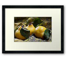 Quince Still Life Framed Print