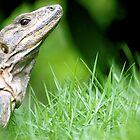 Regal Reptile by Jack Cohen