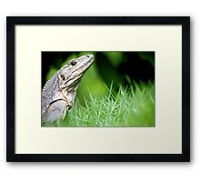 Regal Reptile Framed Print