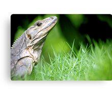 Regal Reptile Canvas Print