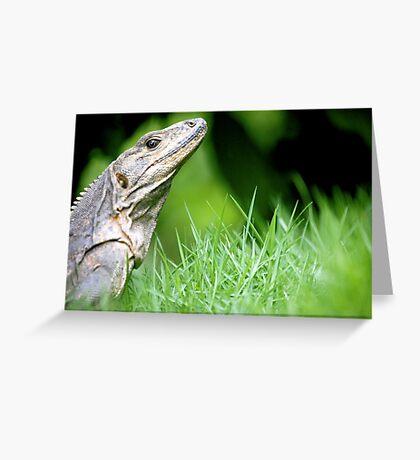 Regal Reptile Greeting Card